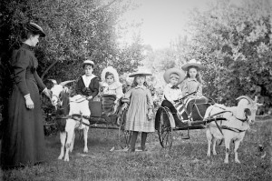 The wealthiest family in South Australia educated its children. At least one boy went to St Peters College, the most prestigious Anglican college. The girls had governesses at home. The children and their billy goat carts, c.1900. State Library of South Australia, PRG-733-453.